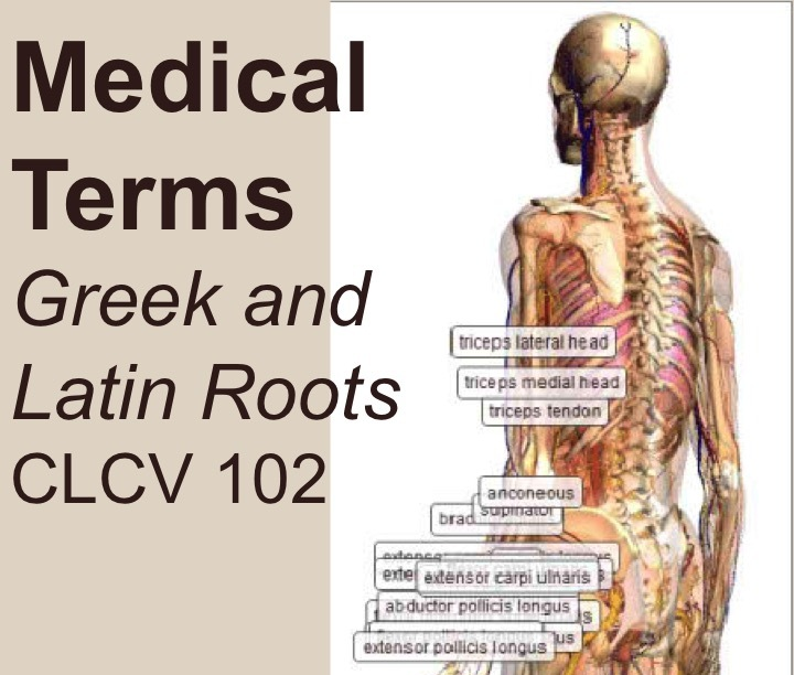 Medical Terms, Greek and Latin Roots